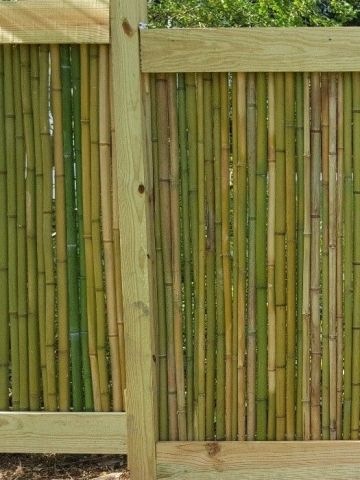 bamboo_fence3